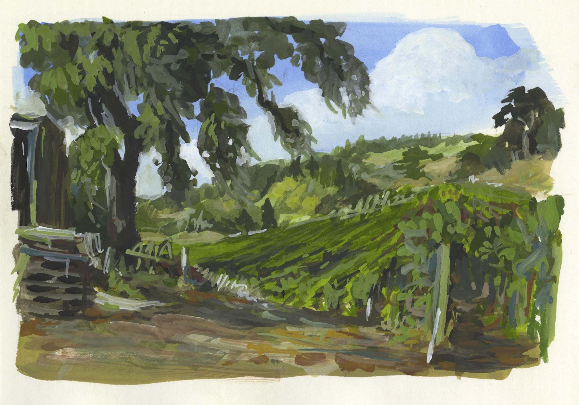 vineyard hills view