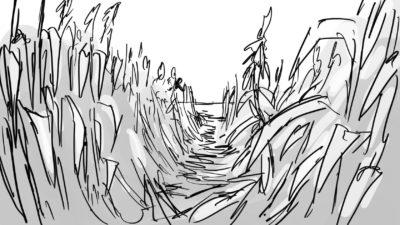 cornfield  zvycoz