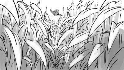 cornfield  gqizvf