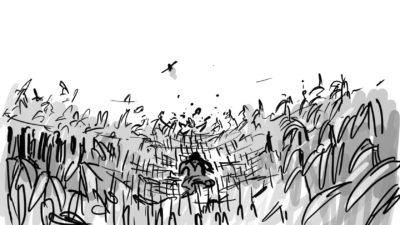 cornfield  fbbys