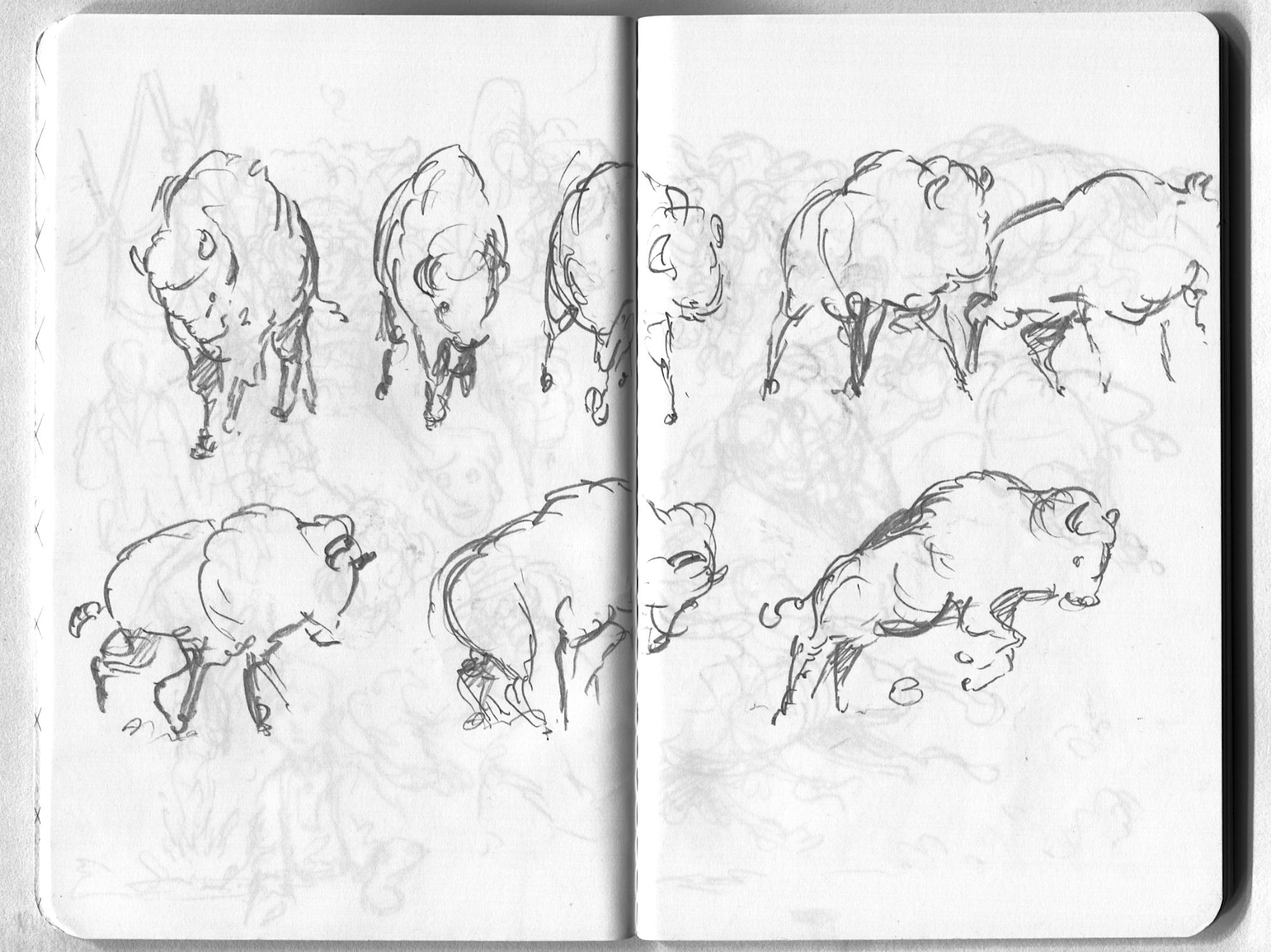 buffalo animation