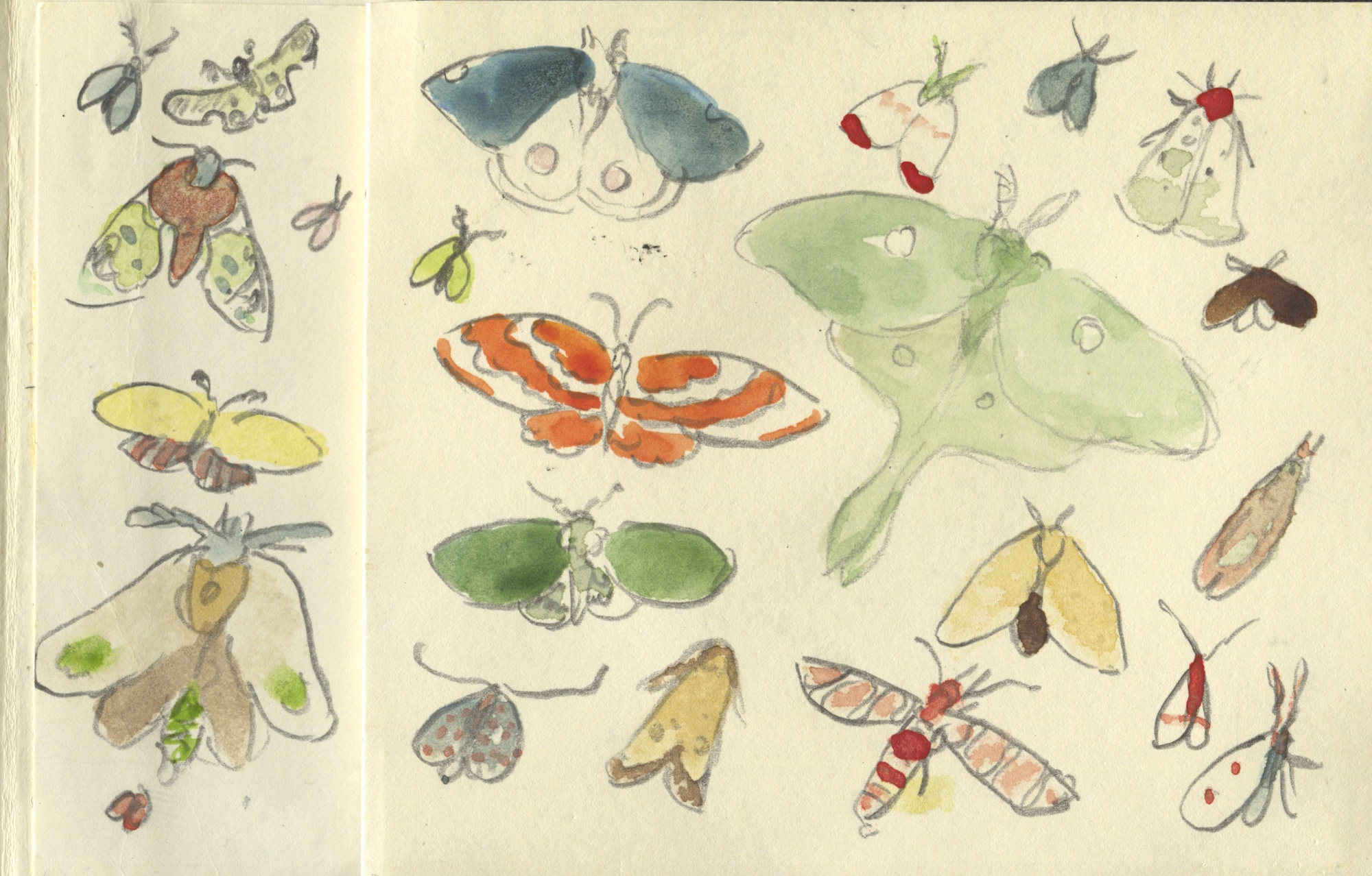 watercolor moths