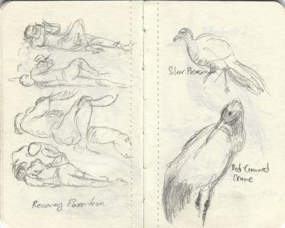 first air and zoo sketches