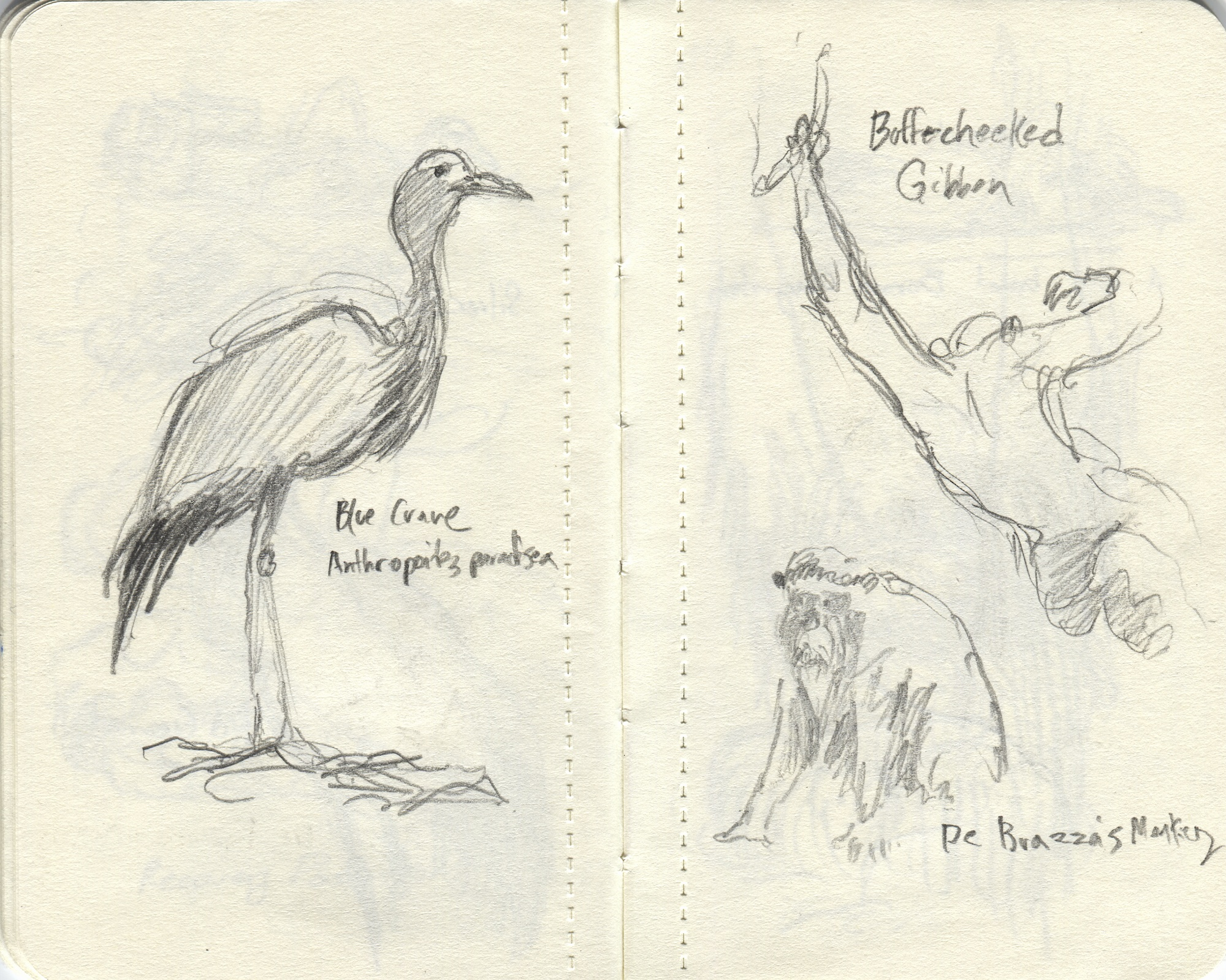 bird and monkey sketches